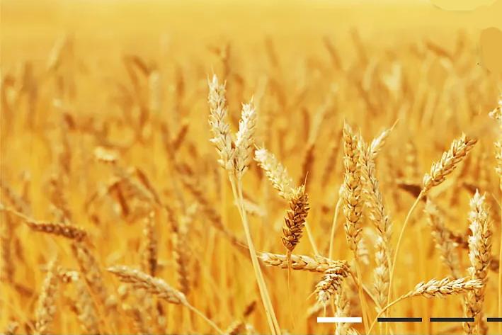 农业生产App开发的重要性