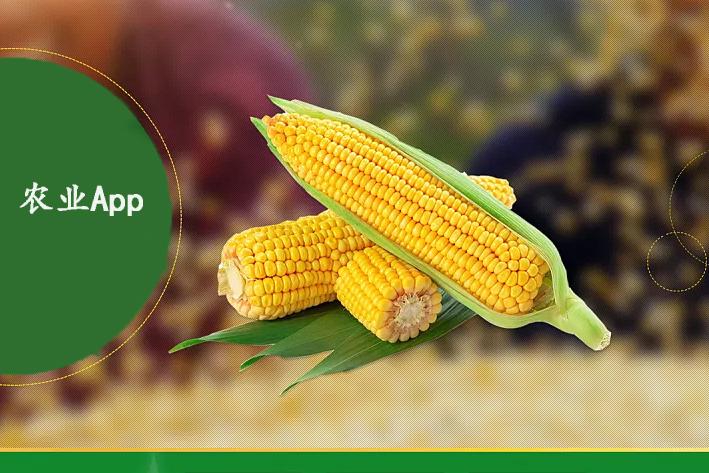 农业App开发原因