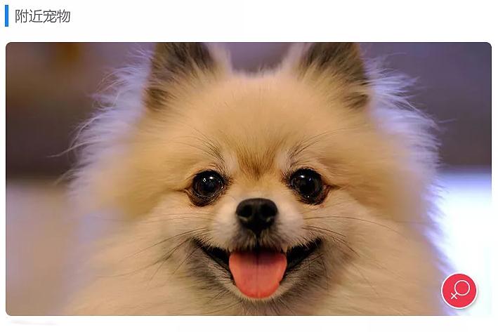 宠物App开发需求特点分析