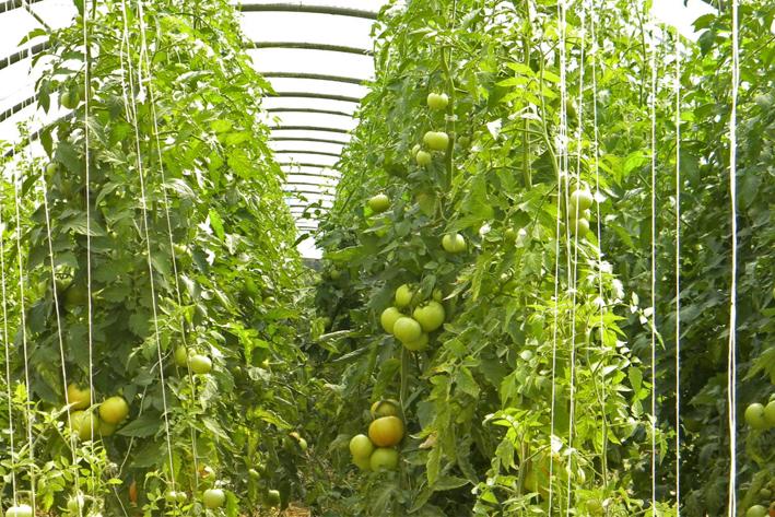 农业病虫害App开发方案
