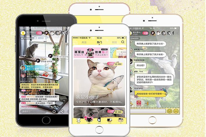 养猫APP开发让养猫过程充满无限乐趣