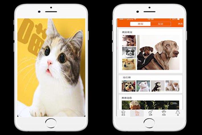 宠物APP软件开发,广州APP开发公司