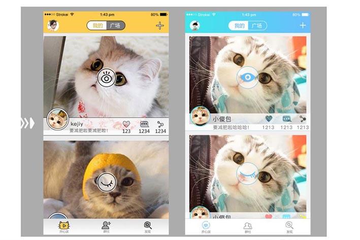 宠物猫APP开发能为用户带来什么